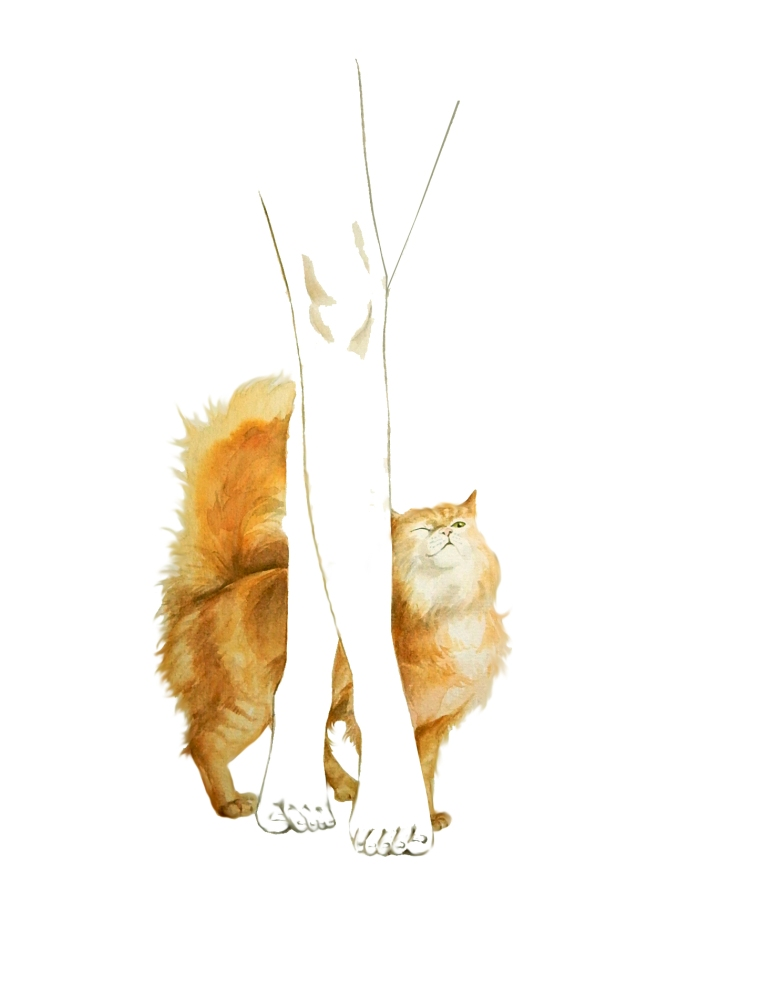 kater_illustration