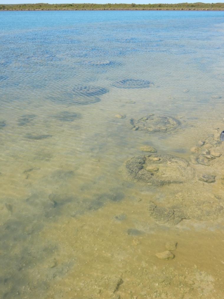 cervantes_australia_stromatoliten