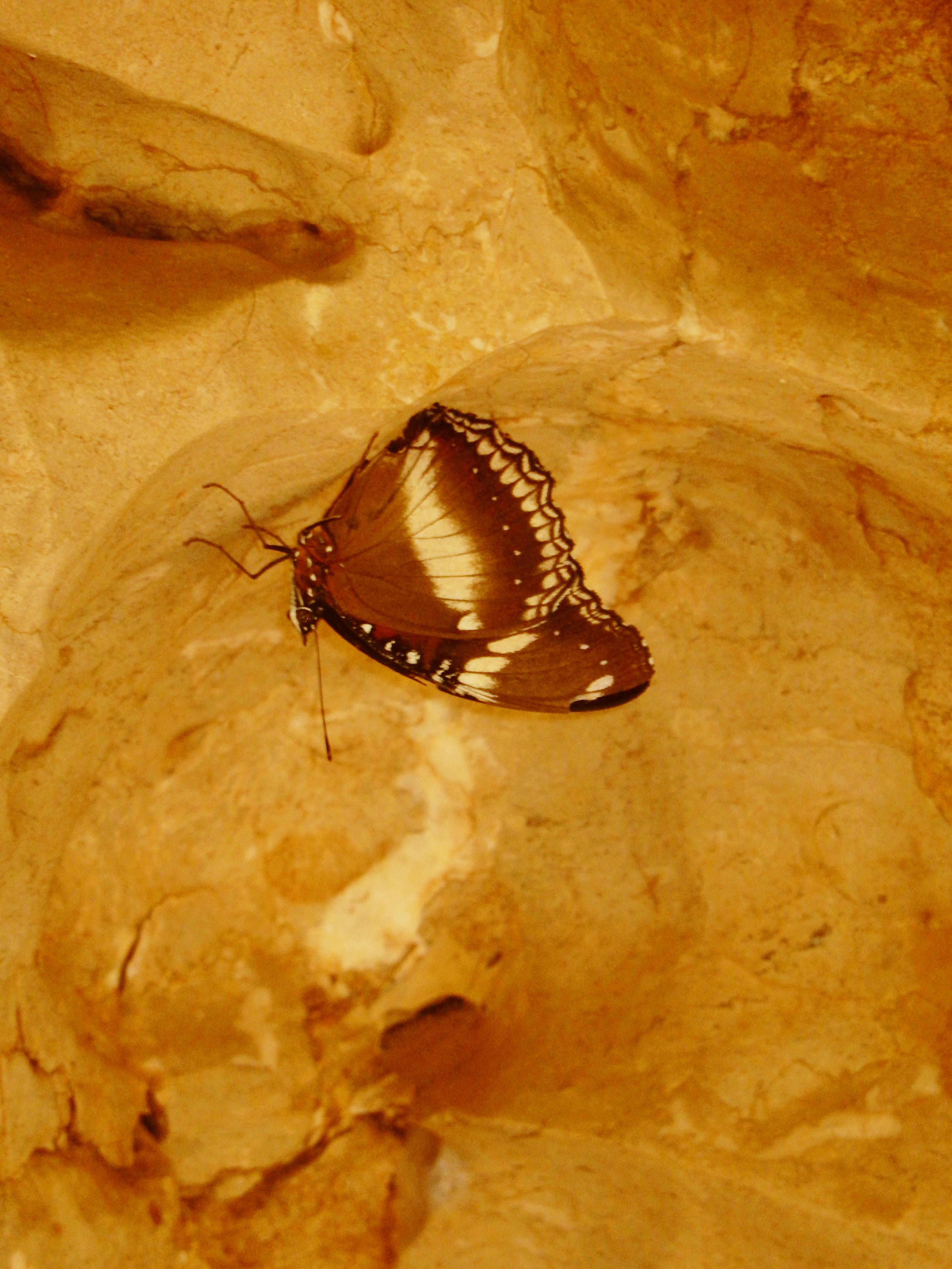 mia-und-ich-blog-reise-travel-westernaustralia-westaustralien-windjana-gorge-schmetterling-butterfly-australien-australia
