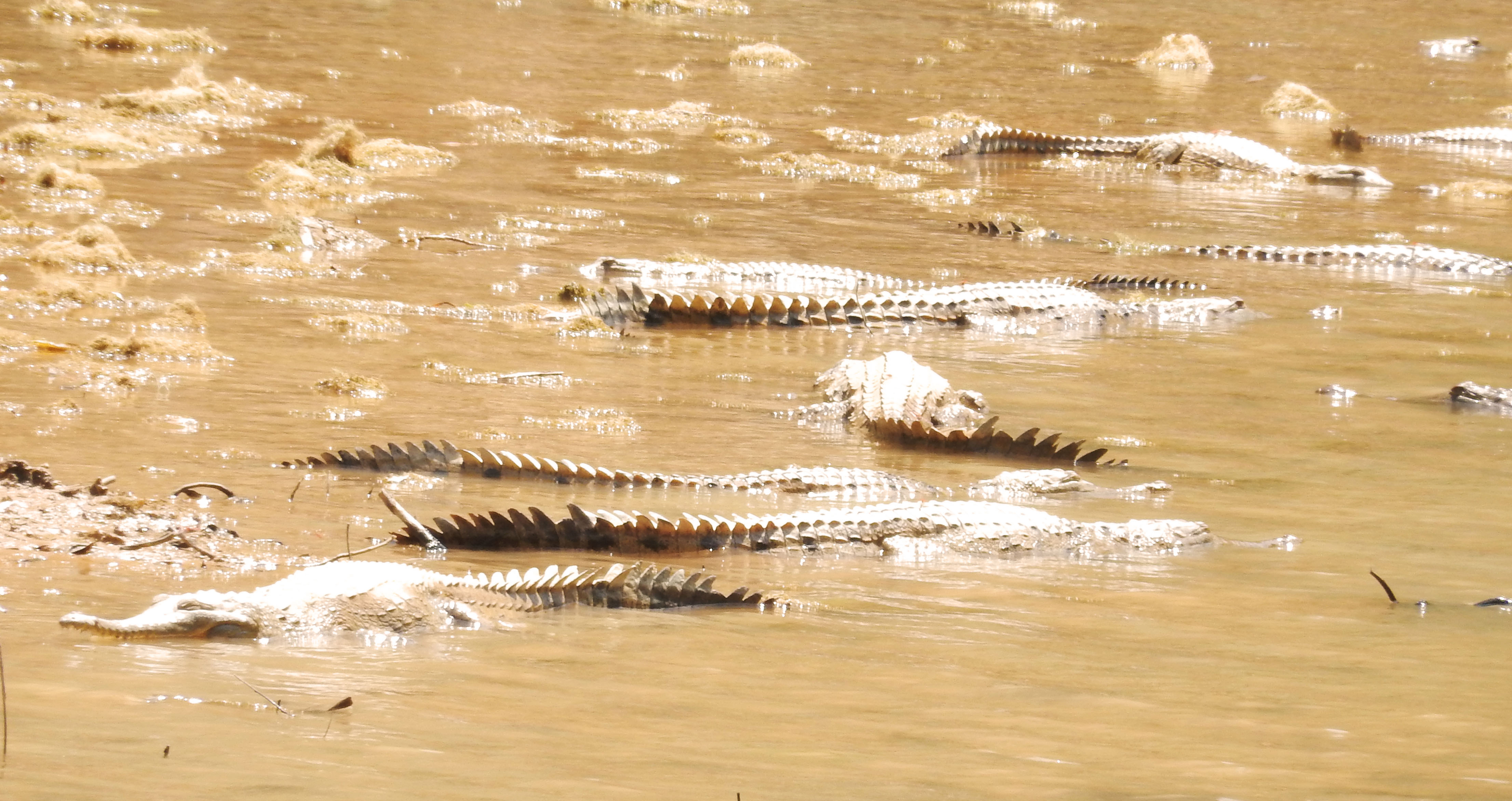 mia-und-ich-blog-reise-travel-westernaustralia-westaustralien-freshwater-crocodile-krokodil-windjana-gorge-australien-australia