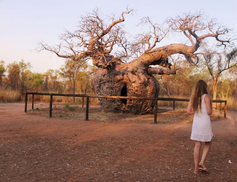 mia-und-ich-blog-reise-travel-westernaustralia-westaustralien-boab-prison-tree-derby-australien-australia