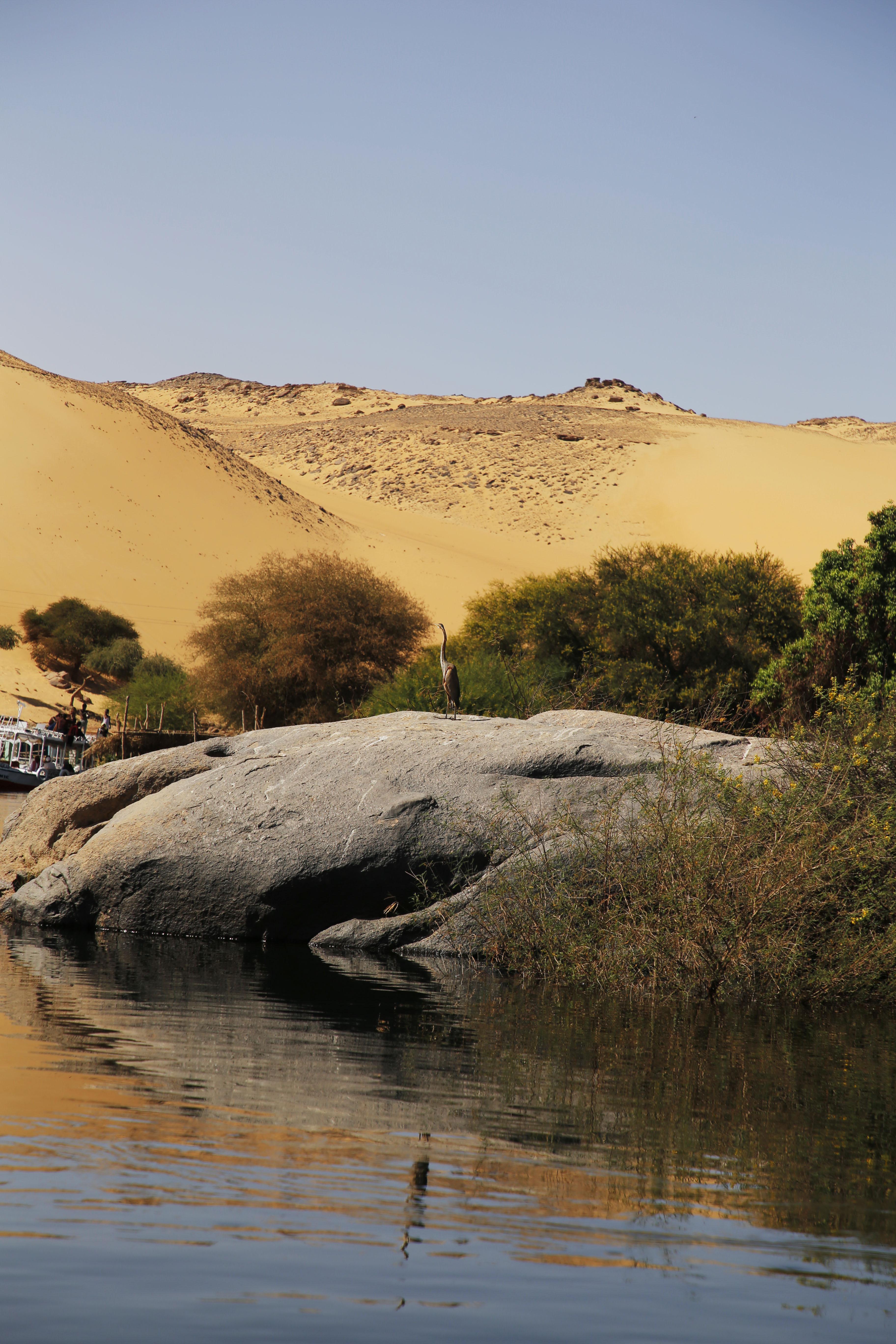 mia und ich blog Nil Wasservogel Wüste Assuan Nubier Dorf Ägypten Egypt