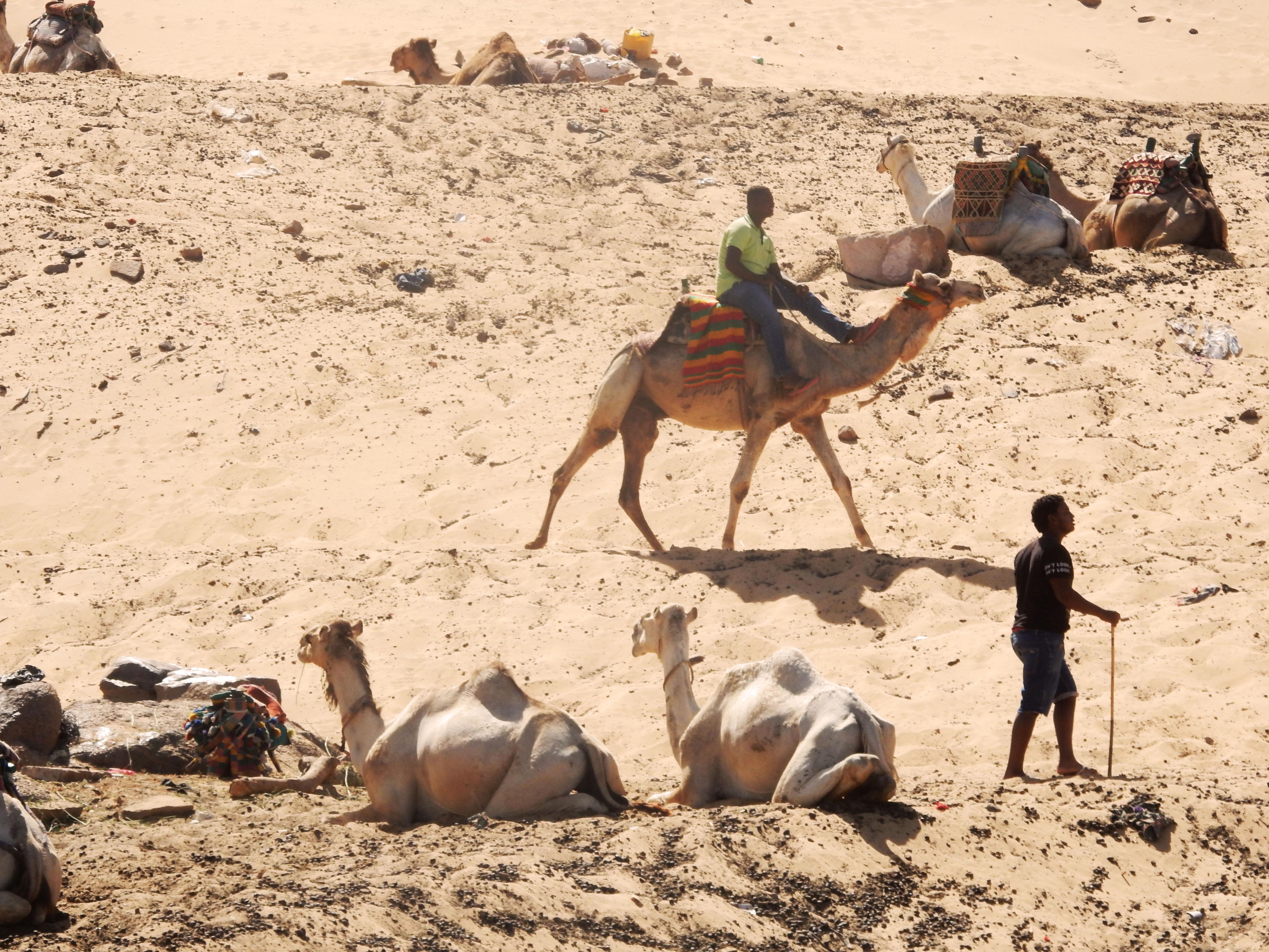 mia und ich blog Nubier Kamele Wüste Ägypten Egypt